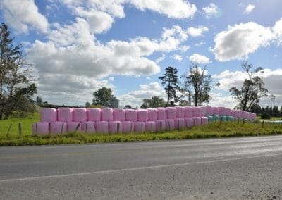 Pink wrapped bales to remind rural women of their health issues, what a great fund raising gesture from Agpac and Triowrap for the Sweet Louise Foundation.